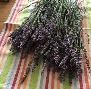 Lavender 0 a